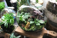 Glass terrarium has a fox among the greens.